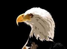 Head of Bald Eagle. Illustration of Head of Bald eagle over a black background stock illustration