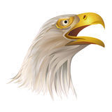 Head of bald eagle  on white background. Royalty Free Stock Image