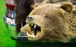 The head of a bear with bared teeth and taillights of a car. Scarecrow Royalty Free Stock Photo