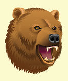 Head of bear Royalty Free Stock Photo