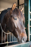 Head of a beautiful horse Royalty Free Stock Photos