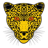 Head beautiful yellow leopard Royalty Free Stock Photos
