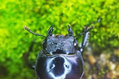 Head of the beetle Stock Photo
