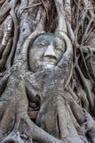 Head bevuxet för Buddha vid fikonträdet i Wat Mahatat i Ayutthaya Royaltyfri Bild
