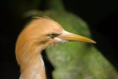 Head of a Bird. Head of the bird with a long bill stock photos