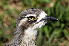 Head of bird Stock Photo