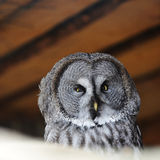 Head of bird Stock Photography