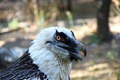 Head birds of prey. At the zoo Royalty Free Stock Photos
