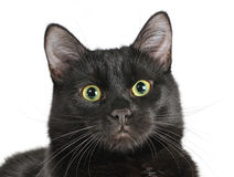 Head of a black cat looking at the camera. Stock Images