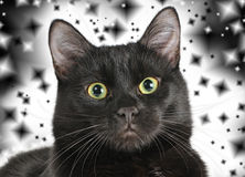 Head of a black cat looking at the camera. Royalty Free Stock Photos