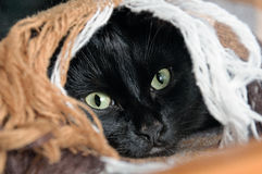 Head of a black cat looks out from under a plaid Stock Photos