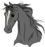 Head of a black horse Royalty Free Stock Images