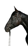 Head of black horse with blue eyes Royalty Free Stock Photos