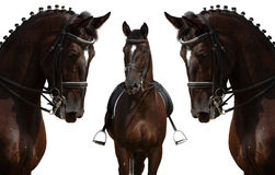 Head of black horses - isolated on white Stock Photos