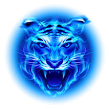Head of blue fire tiger. Head of fire tiger in blue. Illustration on white  background Stock Photos