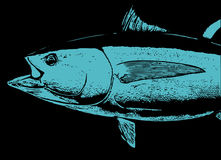 A head of Bluefin tuna Fish Stock Photos