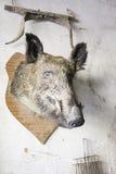 Head of boar Stock Photo