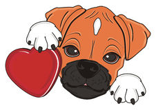 Head of boxer dog with heart royalty free illustration