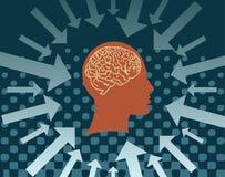Head and brain Stock Photo