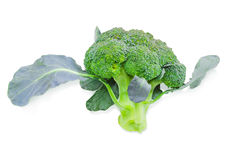 Head of broccoli on a light background Royalty Free Stock Photography