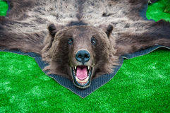 The head of the brown bear Royalty Free Stock Image