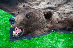 The head of the brown bear Stock Image
