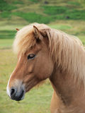 A head of a brown horse. Sideways Stock Image