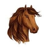 Head of brown horse foal or stud vector sketch Stock Image