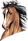 Head of brown horse Royalty Free Stock Photo