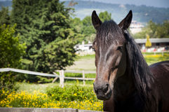 Head of brown horse landscape Royalty Free Stock Photography