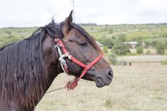 Brown sad horse Stock Image
