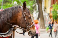 Head of a brown and sad horse that is waiting for tourists. The head of a brown and sad horse that is waiting for tourists stock photo