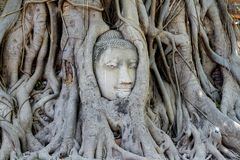 Head budda status in tree roots at thailand. Buddha statue temple wat ancient religion buddhism buddhist ayutthaya background white old travel culture asia art stock photography