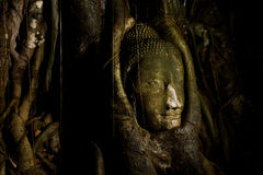 Head of buddha Royalty Free Stock Images