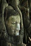 Head buddha Stock Image