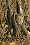 Head of Buddha at Ayutthaya.Thailand. Royalty Free Stock Photo