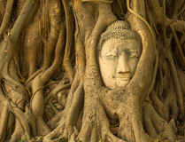 The Head of Buddha in Ayutthaya Royalty Free Stock Photos
