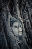 Head of Buddha, Ayutthaya,Thailand Stock Images