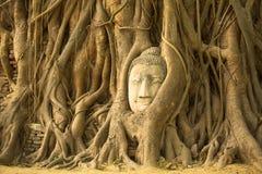 The Head of Buddha in Ayutthaya, Thailand. Travel. Stock Photos