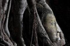 Head of buddha image Royalty Free Stock Images