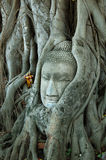 Head of Buddha image 2. A broken head of buddha image is covered by the old age tree in Ayuthaya ,Thailand. Ayuthaya is the old capital city of kindom of royalty free stock images