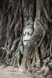 Head of Buddha image in the tree, Ayutthaya, Thailand. Unesco Wo Stock Photo