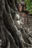 Head of Buddha image in the tree, Ayutthaya, Thailand. Unesco Wo Royalty Free Stock Images