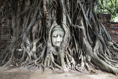 Head of Buddha image in tree, Ayutthaya, Thailand Royalty Free Stock Images