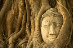 Head of Buddha in the roots of the tree - symbol of Ayutthaya, Thailand. Stock Image