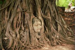 The head of Buddha. In roots of the tree, at wat Mahathat, Ayutthaya, Thailand Royalty Free Stock Photos