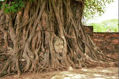 The head of Buddha. In roots of the tree, at wat Mahathat, Ayutthaya,Thailand Stock Photos