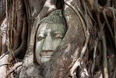 Head of buddha. Head of Sandstone Buddha in The Tree Roots at Wat Mahathat, Ayutthaya, Thailand Stock Photo