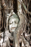 Head of buddha. Head of Sandstone Buddha in The Tree Roots at Wat Mahathat, Ayutthaya, Thailand Royalty Free Stock Photography