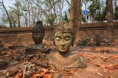 Head of Buddha statue in forest at Wat Umong Royalty Free Stock Images